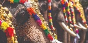 elaborately decorated elephants